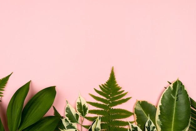 Вид сверху красивых листьев растений с копией пространства