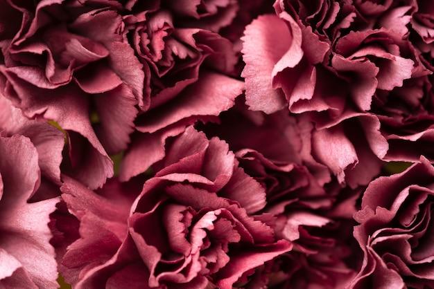 Вид сверху красивых красных цветов