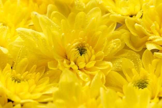 아름 다운 노란 색된 꽃의 상위 뷰