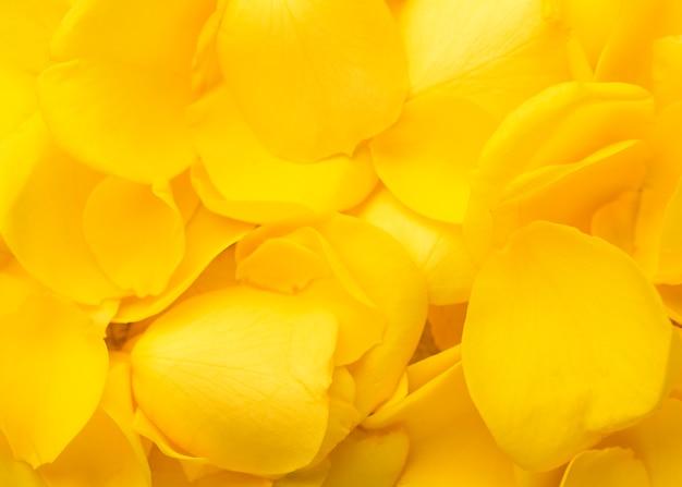 美しい黄色の花の上面図