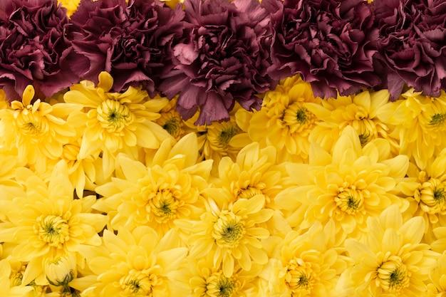 美しい色の花の上面図