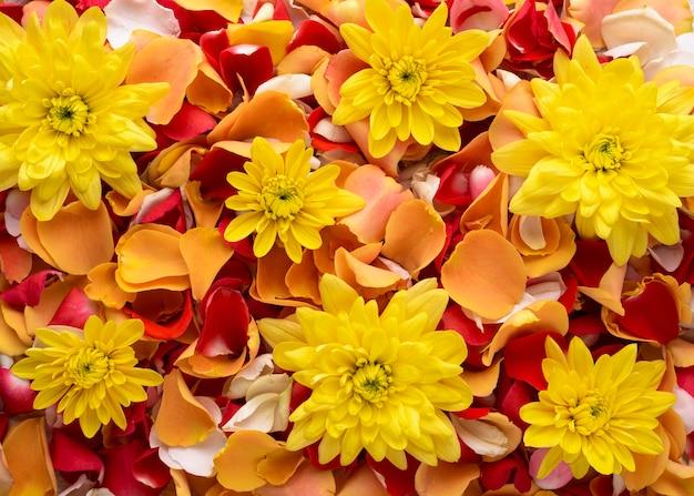 아름답게 색깔의 꽃의 상위 뷰