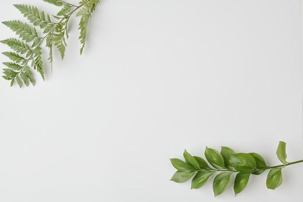 スペースとして使用できる白い机の上の緑の葉と国産植物とシダの枝の上面図