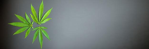 黒の背景に大麻の葉の上面図。マリファナの葉