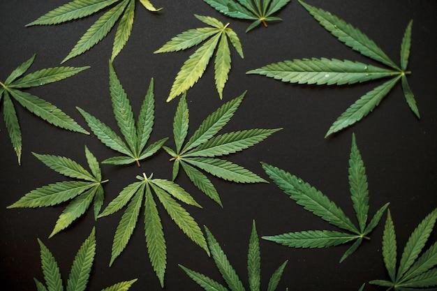 Вид сверху листьев конопли на черном фоне. листья марихуаны