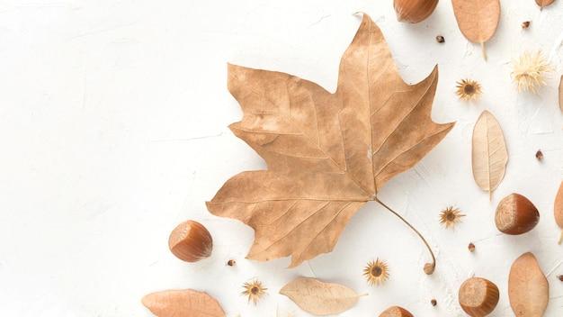 Вид сверху каштанов с копией пространства и осенних листьев