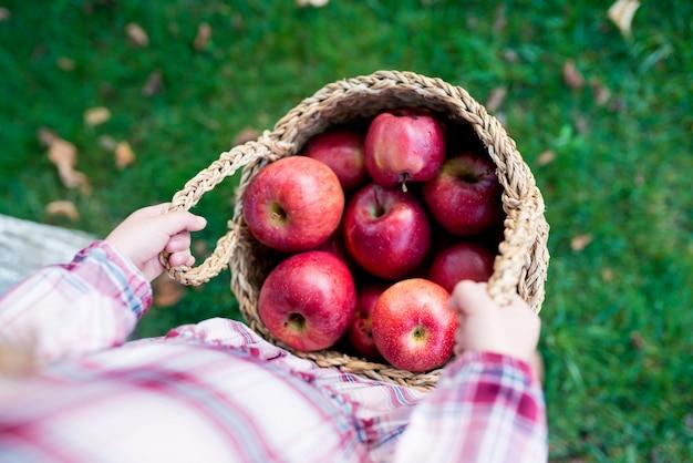 果樹園で新鮮な有機赤いリンゴと籐のバスケットを保持している子供の女の子の手の上面図