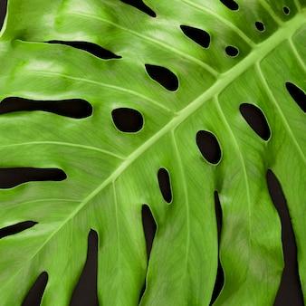 Monstera 잎의 클로즈업의 상위 뷰