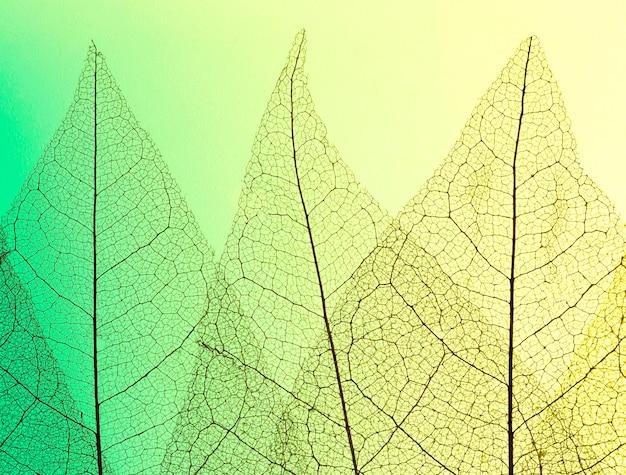 Вид сверху на пластинки цветных прозрачных листьев