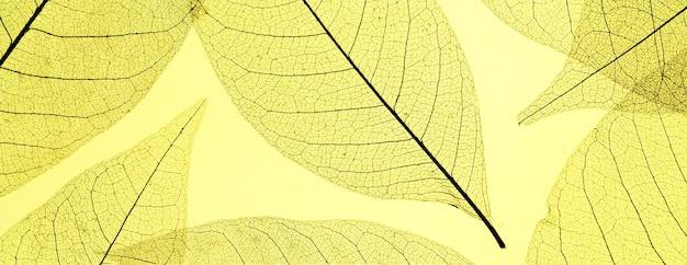 컬러 반투명 잎의 상위 뷰