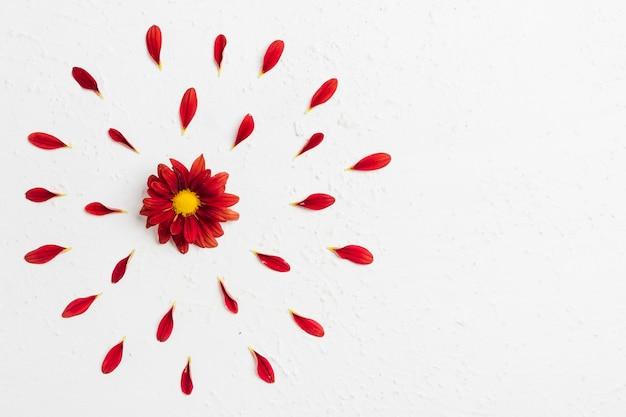 花びらとコピースペースでカラフルな春のデイジーのトップビュー
