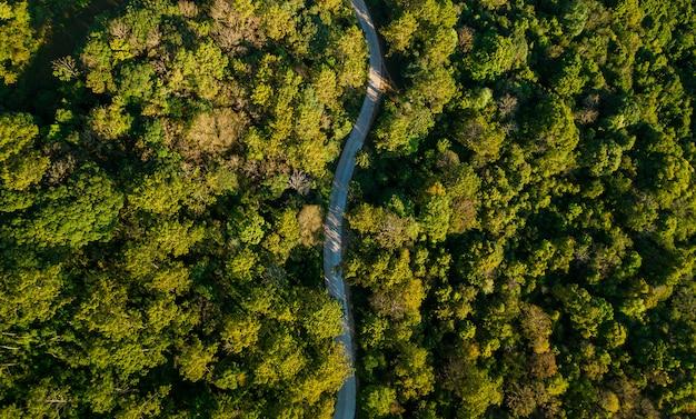 Вид сверху сельской дороги, проходящей через зеленый форрест и горы