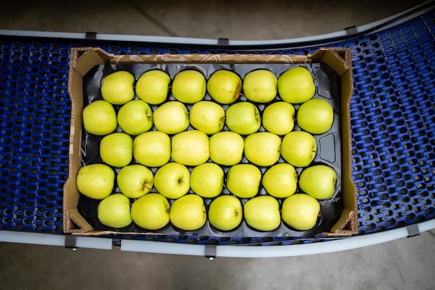 식품 가공 공장에서 컨베이어 벨트로 운반되는 녹색 유기농 사과로 가득 찬 상자의 상위 뷰.