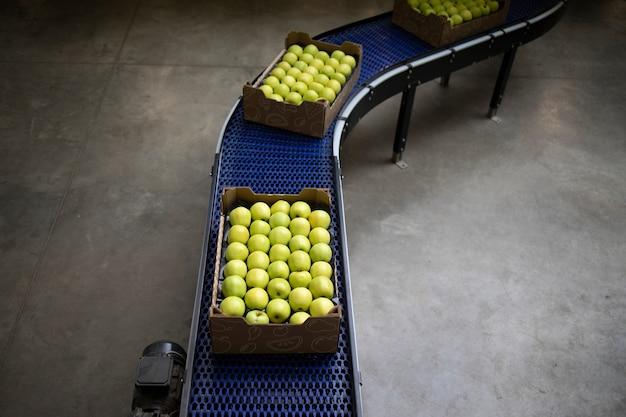 食品加工工場のベルトコンベアで運ばれている緑色の有機リンゴでいっぱいの箱の上面図。