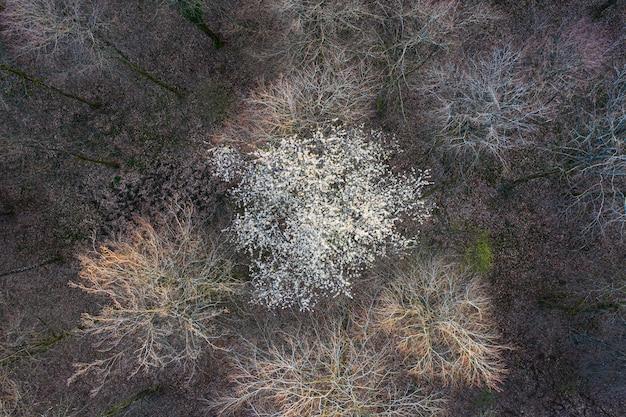 봄의 시작에 낙엽수 숲의 상위 뷰