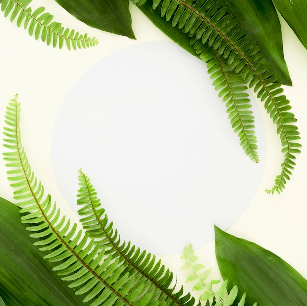 Вид сверху различных листьев и папоротников с копией пространства