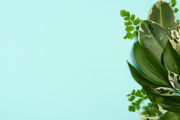 다른 식물의 평면도 복사 공간 나뭇잎