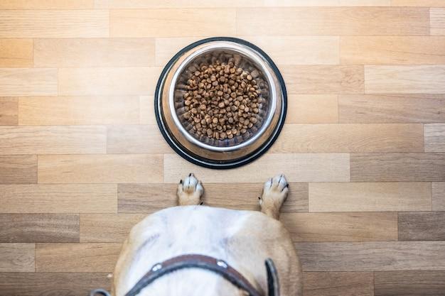 Вид сверху собаки готовы съесть еду из миски. точка зрения щенка, сидящего перед миской с едой в помещении.