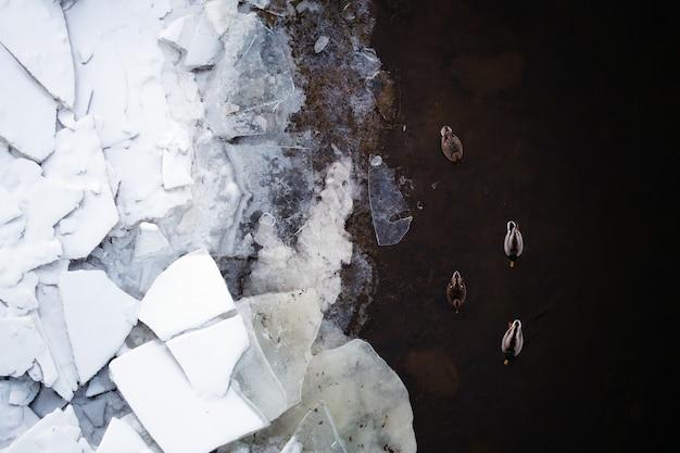 川のアヒルの平面図。水に飛び散るアヒル。