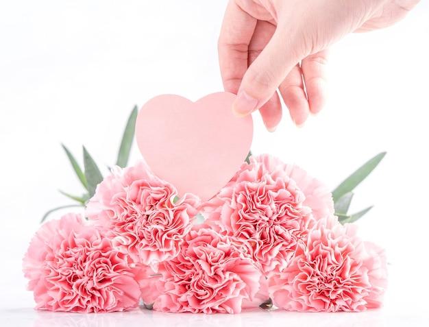カード、クローズアップ、コピースペースで明るい白の背景に分離された優雅な咲く甘いピンク色の柔らかいカーネーションの上面図
