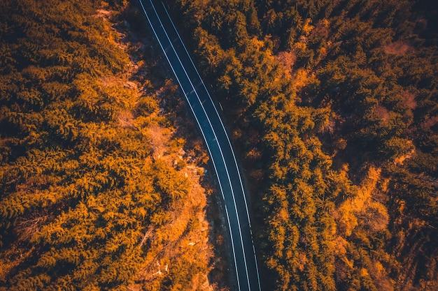 가을 나무 사이가는 빈 포장 도로의 상위 뷰