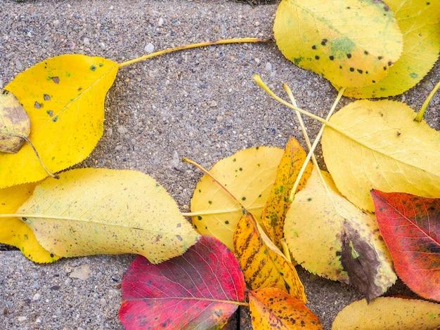 アスファルトの表面に横たわっている梨の木の落ちた黄色と赤の葉の上面図