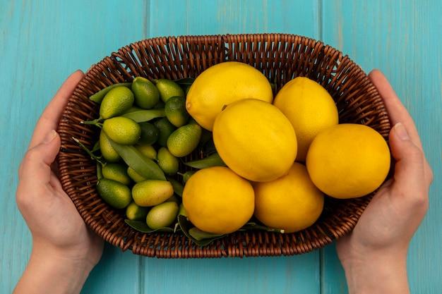 푸른 나무 벽에 kinkans와 레몬과 같은 감귤류의 양동이를 들고 여성 손의 상위 뷰