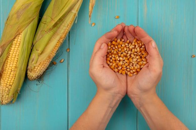 青い木製のテーブルに新鮮なトウモロコシと新鮮なトウモロコシの穀粒を保持している女性の手の上面図