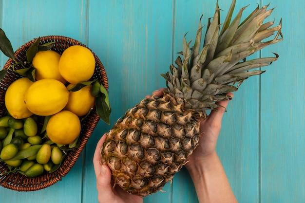 푸른 나무 벽에 양동이에 kinkans 및 레몬과 같은 과일과 함께 신선한 파인애플을 들고 여성 손의 상위 뷰