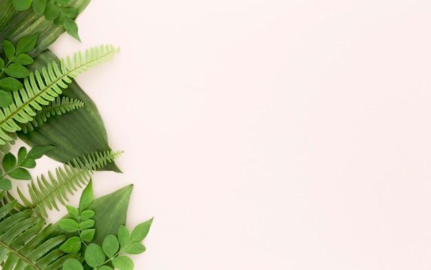 양치류와 잎 복사 공간의 상위 뷰