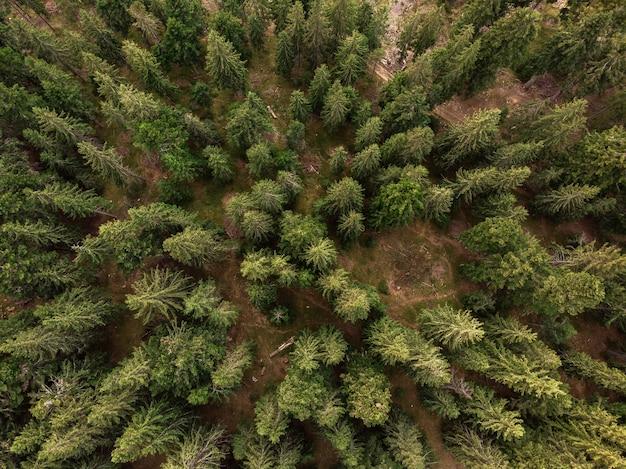 Вид сверху елового леса