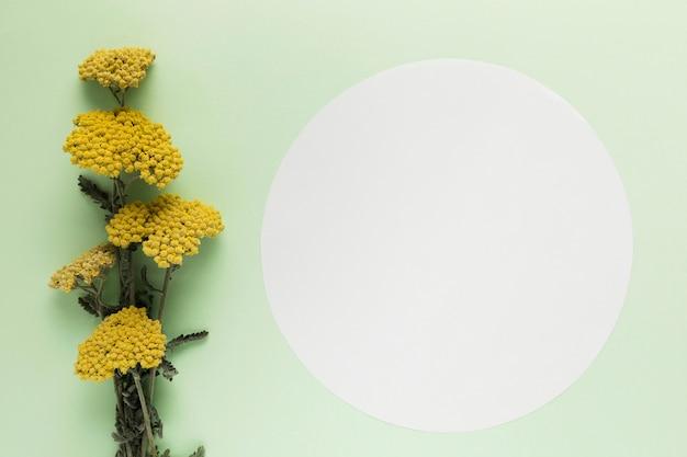 Вид сверху цветочные концепции с копией пространства