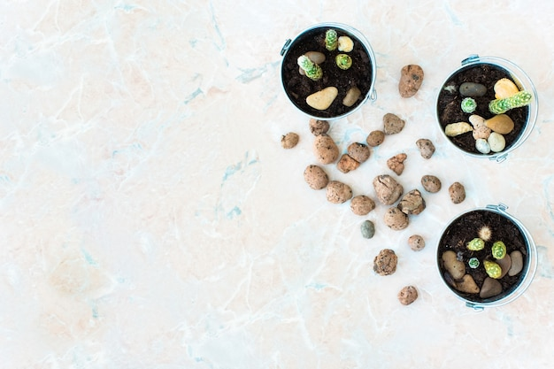 サボテンと小石の植木鉢のトップビュー