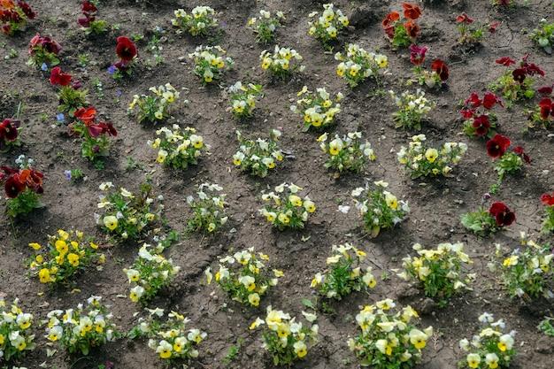 Вид сверху на цветы, растущие в почве за пределами сада.