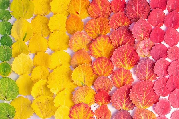 色別の葉の配置のトップビュー
