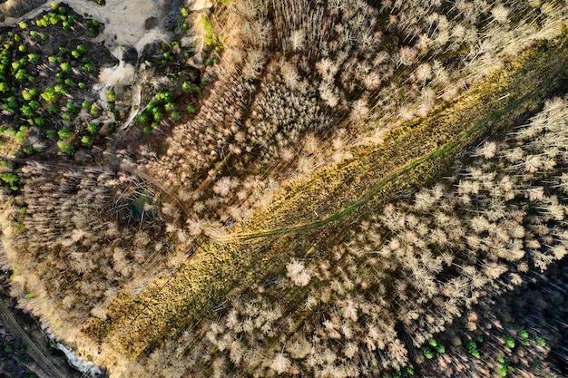 林道の上面図森の木々のアリアルドローンショット。