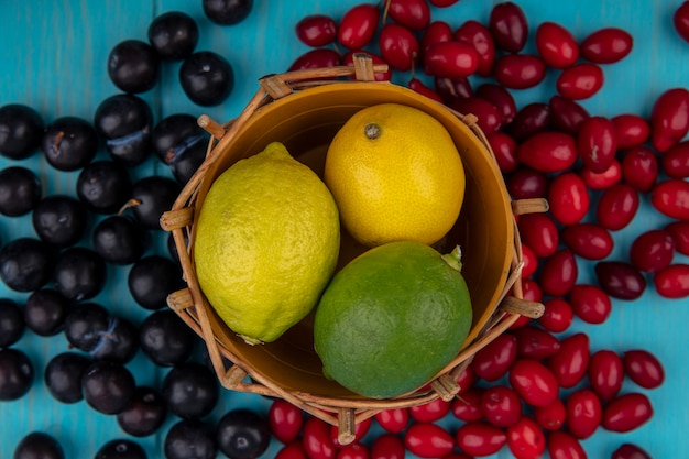 산딸 나무 열매와 푸른 나무 배경에 고립 된 검은 포도 양동이에 신선한 레몬의 상위 뷰