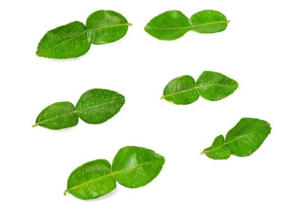 白い背景の上の新鮮なライムの葉の上面図