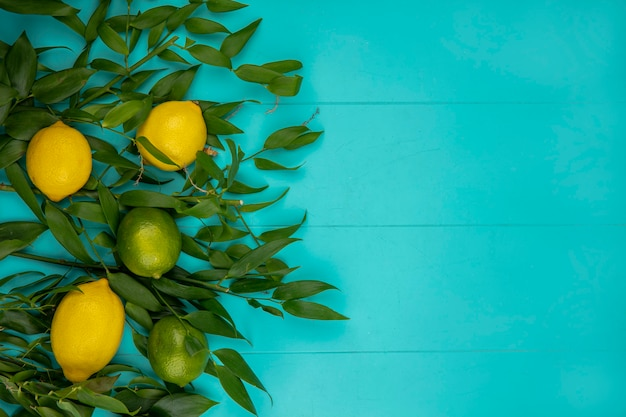 Вид сверху свежих желтых и зеленых лимонов с зелеными листьями на синем с копией пространства