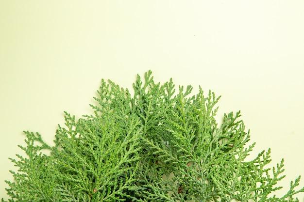 白い表面の緑の枝の上面図