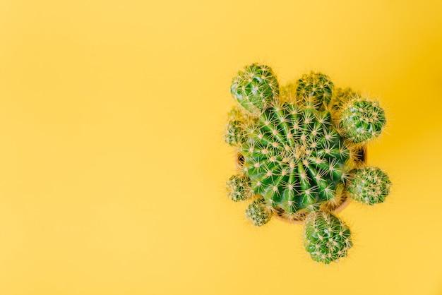 黄色の背景に緑のサボテンの平面図です。
