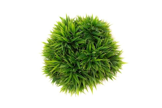 Вид сверху зеленых круглых листьев в горшке, изолированные на белом фоне