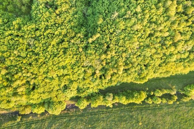日当たりの良い春や夏の日に緑の森の平面図です。ドローン写真、抽象的な背景。