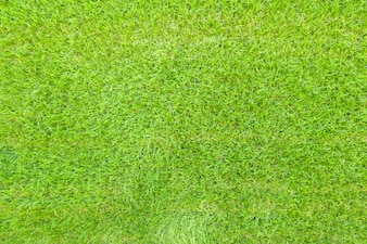 Top view of green grass background texture.