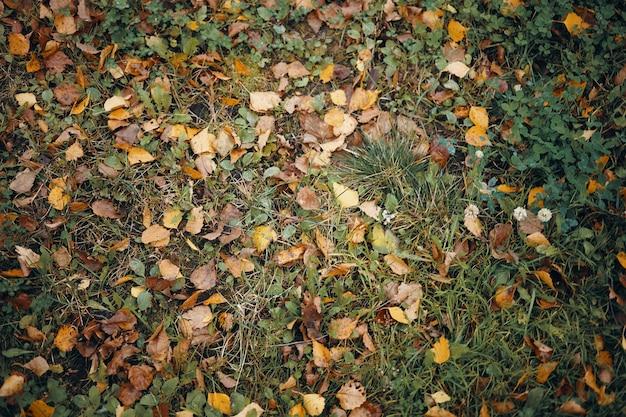 秋の黄色がかった葉で覆われた緑の草の上面図。湿った牧草地に横たわっている多くのカラフルな黄色と茶色の葉の水平方向のショット。秋、季節、自然と環境の概念