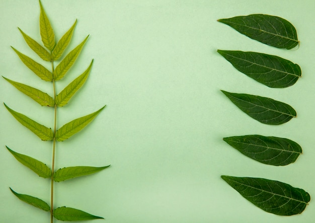Вид сверху зеленого листа на зеленой поверхности