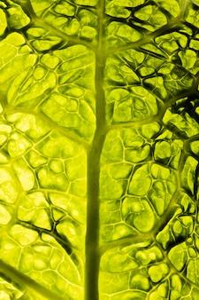 緑の葉のテクスチャの上面図