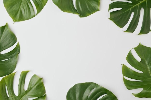 あなたの広告のための空白の場所を囲むまたはスペースとして使用できる国産植物の緑の葉の上面図
