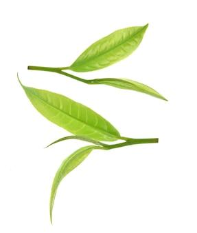 Вид сверху листьев зеленого чая, изолированные на белом фоне