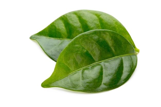 Вид сверху на листья зеленого чая